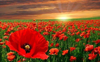 Agnetencollege herdenkt de Groote Oorlog